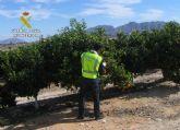 La Guardia Civil detiene a los tres integrantes de una banda por la sustracción de cuatro toneladas de fruta en Fortuna