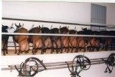 Agricultura participa en un proyecto europeo para conseguir la reproducción caprina en cualquier época del año y leche sin hormonas