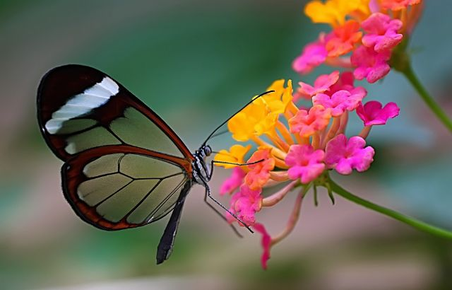 La agenda cultural de esta semana arranca mañana con el cine documental Expedición entomológica Venezuela ' 97 - 3, Foto 3