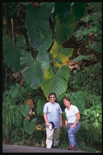 La agenda cultural de esta semana arranca mañana con el cine documental Expedición entomológica Venezuela ' 97 - 4, Foto 4