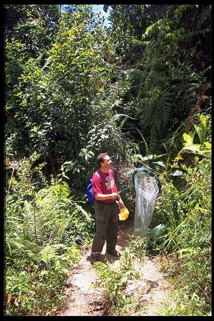 La agenda cultural de esta semana arranca mañana con el cine documental Expedición entomológica Venezuela ' 97 - 5, Foto 5