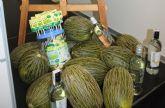 El melón de Torre-Pacheco continúa su andadura para conseguir el sello distintivo de calidad
