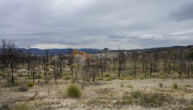 La Consejería de Presidencia continúa los trabajos de recuperación ambiental de la zona afectada por el incendio de Salmerón - 1, Foto 1