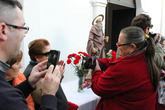 Los animales reciben su tradicional bendición por San Antón - 2, Foto 2