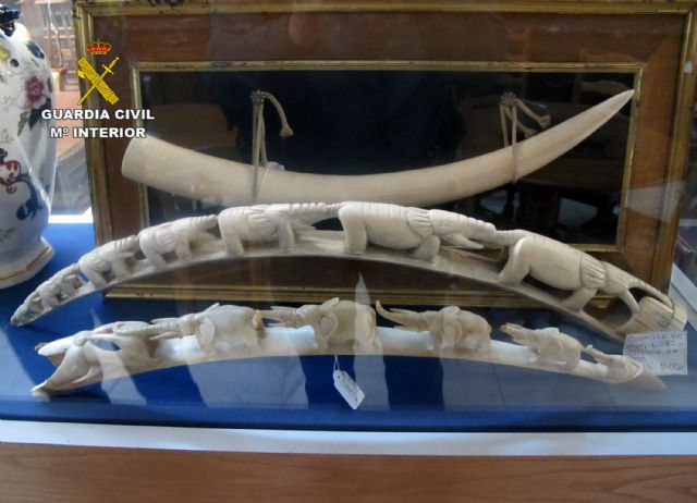 The Civil Guard seize twenty pieces of ivory trade in Totana, Foto 3