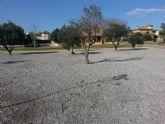 Parques y Jardines planta más de 50 árboles en el acondicionamiento del parque 'José Ruiz Manzanares'
