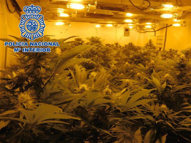 La Policía Nacional desmantela un cultivo de marihuana en un chalet de El Fenazar - 2, Foto 2