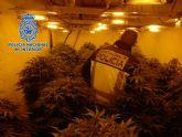 La Policía Nacional desmantela un cultivo de marihuana en un chalet de El Fenazar