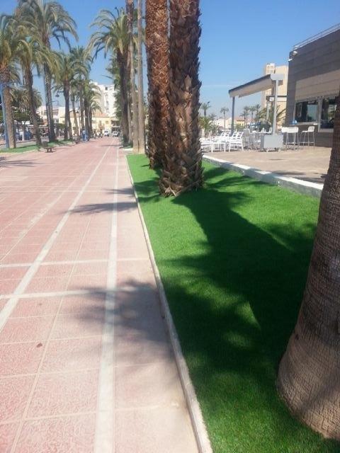 Parques y Jardines coloca césped artificial en los parterres de las palmeras del paseo junto a la explanada Barnuevo - 2, Foto 2