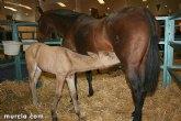 Alrededor de 400 caballos participarán en Equimur 2014