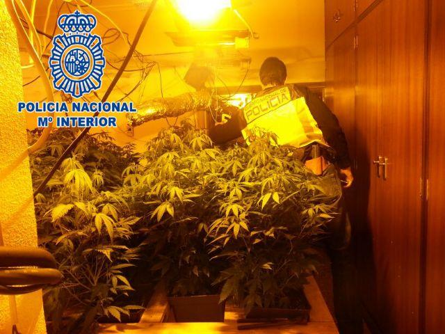 La Policía Nacional halla 107 plantas de marihuana en una vivienda de Javalí Nuevo, Murcia - 2, Foto 2