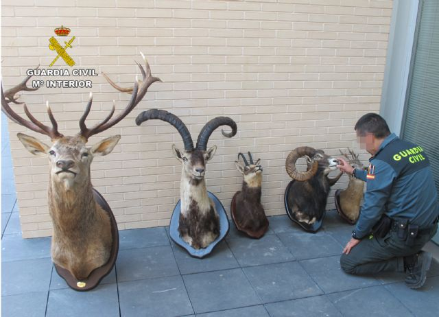 The Civil Guard is involved in Totana five pieces of dried hunting were transported illegally