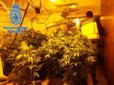 La Policía Nacional halla 107 plantas de marihuana en una vivienda de Javalí Nuevo, Murcia
