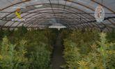 La Guardia Civil realiza 162 arrestos por cultivo y tr�fico de marihuana en la Regi�n durante 2013
