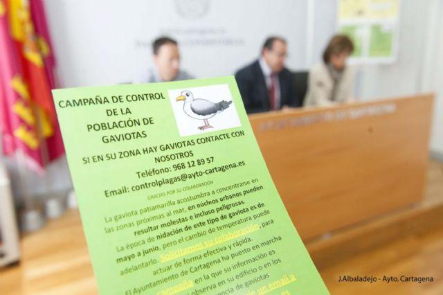 Sanidad incluye este año al mosquito tigre en su campaña de control de plagas - 2, Foto 2