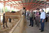 Inaugurada la Feria de Ganado Equino de Puerto Lumbreras 2014 que muestra más de 400 ejemplares de ganado durante todo el fin de semana