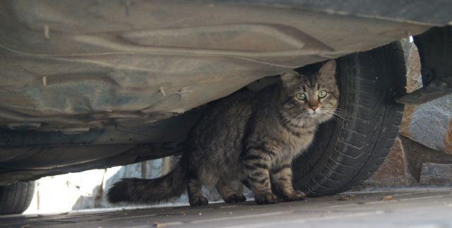 El ayuntamiento adjudica el contrato de servicios de recogida de animales abandonados, vagabundos o extraviados para los dos próximos años, Foto 2