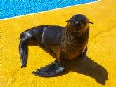 Terra Natura Murcia incorpora a un oso marino al espectáculo con leones marinos