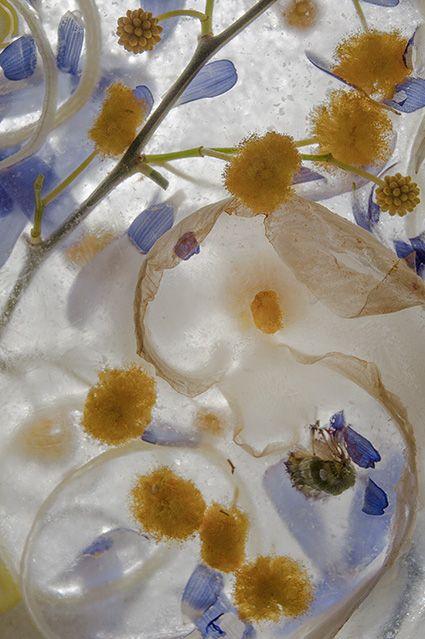 Imágenes de naturaleza onírica de Teresa Arnal en su exposición fotográfica Nunca Jamás en la Aurora - 1, Foto 1