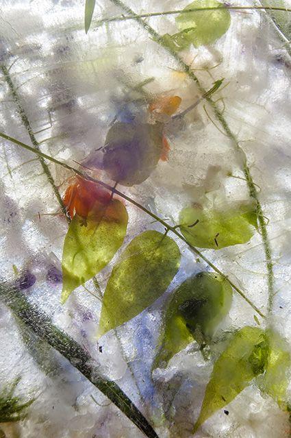 Imágenes de naturaleza onírica de Teresa Arnal en su exposición fotográfica Nunca Jamás en la Aurora - 2, Foto 2