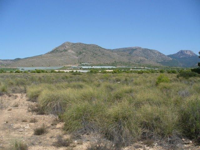 La Asociaci�n de Propietarios de la ZEPA del Llano de las Cabras solicita su desclasificaci�n por haber desaparecido la alondra de Dupont, Foto 1