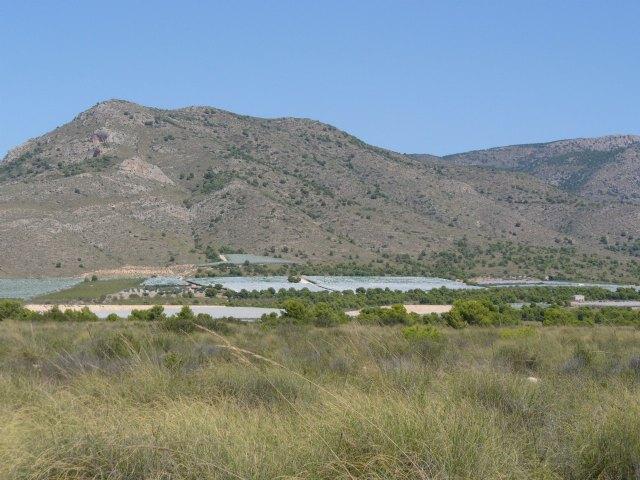 La Asociaci�n de Propietarios de la ZEPA del Llano de las Cabras solicita su desclasificaci�n por haber desaparecido la alondra de Dupont, Foto 2