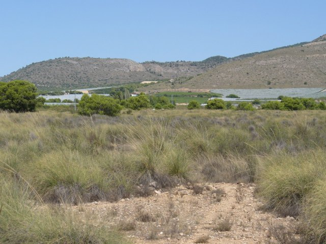 La Asociaci�n de Propietarios de la ZEPA del Llano de las Cabras solicita su desclasificaci�n por haber desaparecido la alondra de Dupont, Foto 3