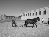 Museo del Labrador en Roldán y I Fiesta de la Trilla