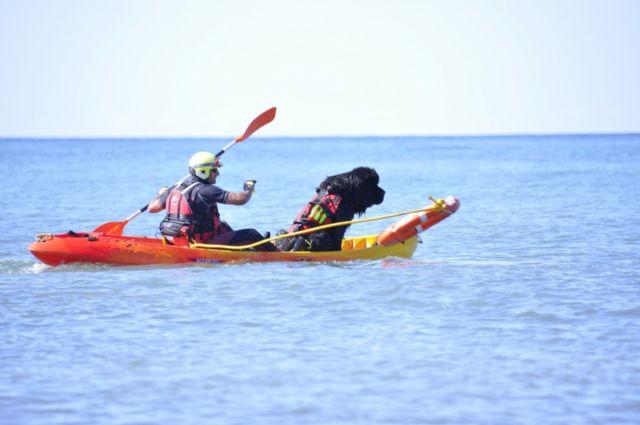 El servicio de Emergencias incorpora un perro de rescate al dispositivo de salvamento en playas - 2, Foto 2