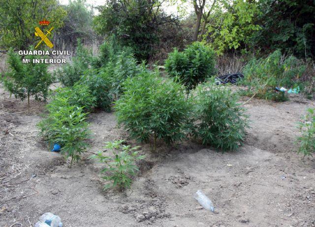 La Guardia Civil detiene a los cuatro responsables de dos plantaciones de marihuana en Espinardo y Cabezo de Torres - 1, Foto 1