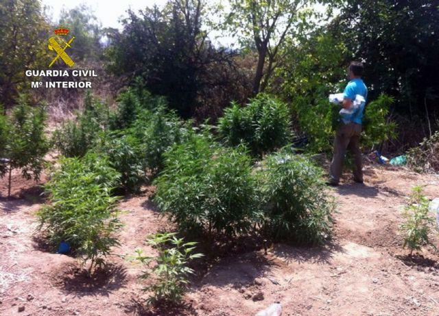 La Guardia Civil detiene a los cuatro responsables de dos plantaciones de marihuana en Espinardo y Cabezo de Torres - 2, Foto 2
