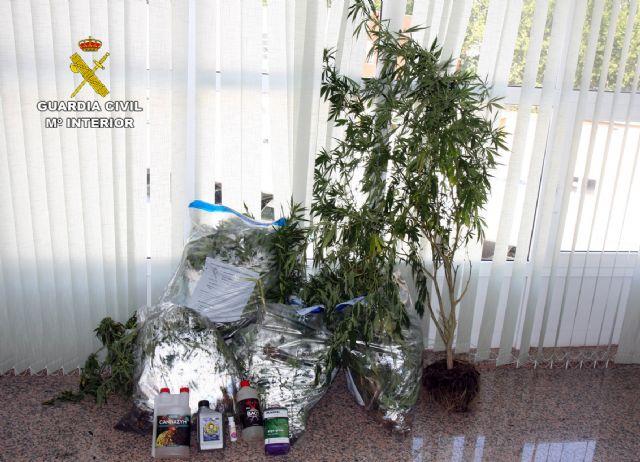 La Guardia Civil detiene a los cuatro responsables de dos plantaciones de marihuana en Espinardo y Cabezo de Torres - 3, Foto 3