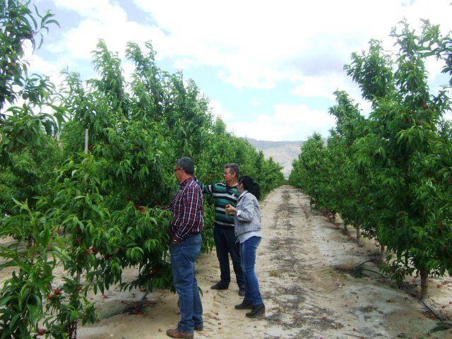 Medio centenar de productores agrícolas mazarroneros se verán afectados por el veto ruso, Foto 4