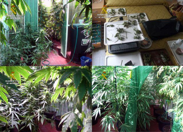 La Guardia Civil desmantela un invernadero intensivo de marihuana en un domicilio de Pliego - 2, Foto 2