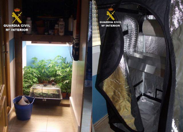 La Guardia Civil desmantela un invernadero intensivo de marihuana en un domicilio de Pliego - 3, Foto 3