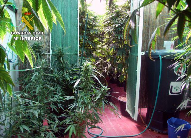 La Guardia Civil desmantela un invernadero intensivo de marihuana en un domicilio de Pliego - 5, Foto 5