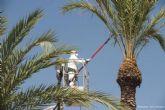 Jardines consigue reducir la muerte de palmeras afectadas por el picudo rojo