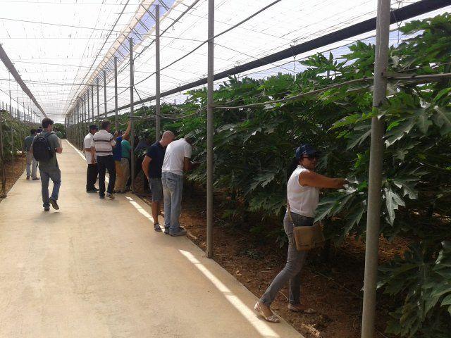Agricultores mazarroneros muestran su interés por el cultivo de frutos tropicales - 1, Foto 1