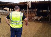 La Guardia Civil desmantela un 'clan familiar' dedicado a la sustracción de corderos en Fuente Álamo
