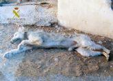 La Guardia Civil detiene a un pastor como presunto responsable de la muerte de un perro y la desnutrición de otro