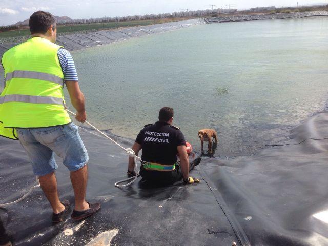 Protección Civil de Torre-Pacheco rescata a un perro de un pantano en Lo Ferro - 1, Foto 1