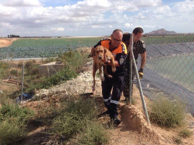 Protección Civil de Torre-Pacheco rescata a un perro de un pantano en Lo Ferro - 2, Foto 2
