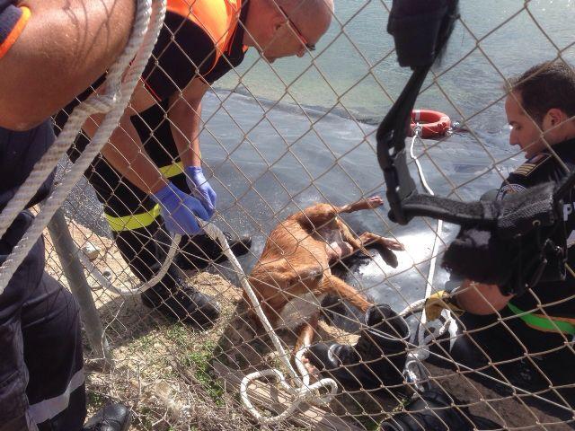 Protección Civil de Torre-Pacheco rescata a un perro de un pantano en Lo Ferro - 3, Foto 3