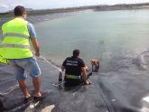 Protección Civil de Torre-Pacheco rescata a un perro de un pantano en Lo Ferro
