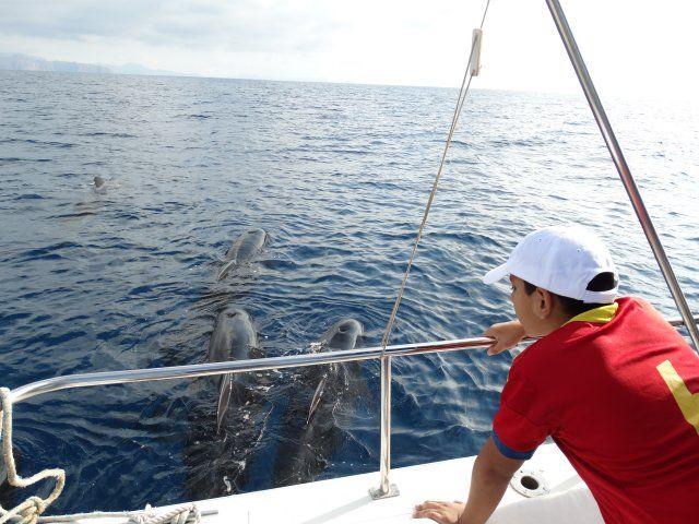 Una veintena de jóvenes disfruta de un avistamiento de cetáceos en la Bahía de Mazarrón, Foto 1