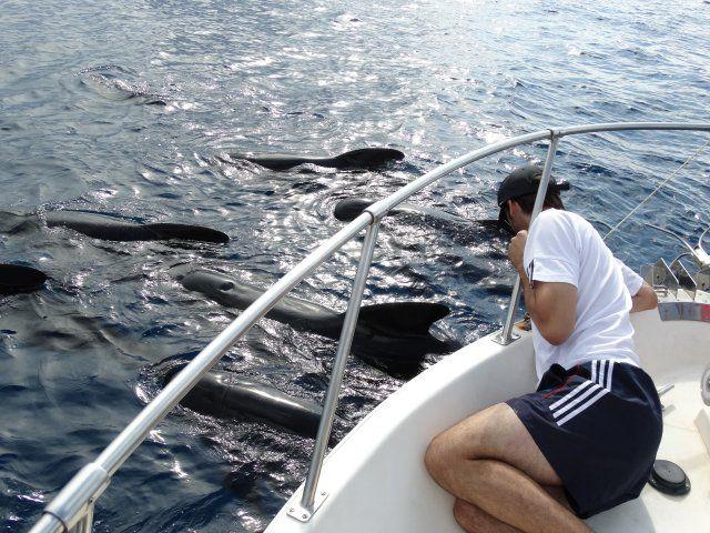 Una veintena de jóvenes disfruta de un avistamiento de cetáceos en la Bahía de Mazarrón, Foto 2