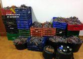 La Guardia Civil detiene a 32 personas relacionadas con robos en explotaciones agrícolas de la Región