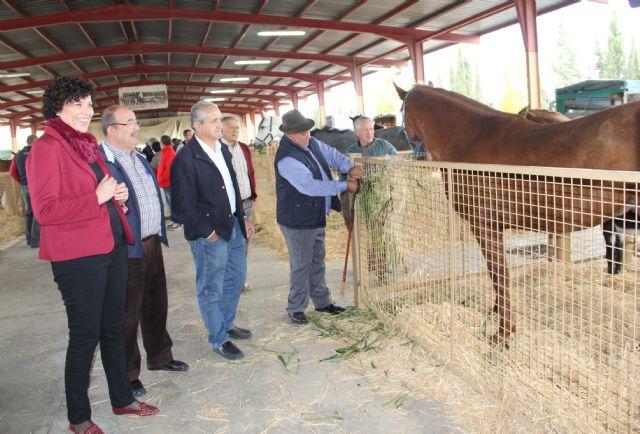 Inaugurada la tradicional Feria de Ganado Equino con la participación de más de 400 cabezas de ganado - 1, Foto 1
