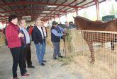 Inaugurada la tradicional Feria de Ganado Equino con la participación de más de 400 cabezas de ganado