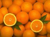 ASAJA Murcia preocupada por el hundimiento de precios de la naranja y exige una autoregulación de la oferta